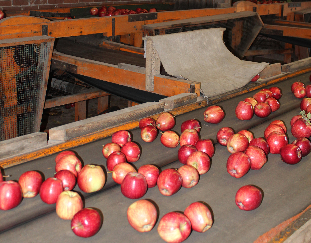 Doud Orchards sorting machine