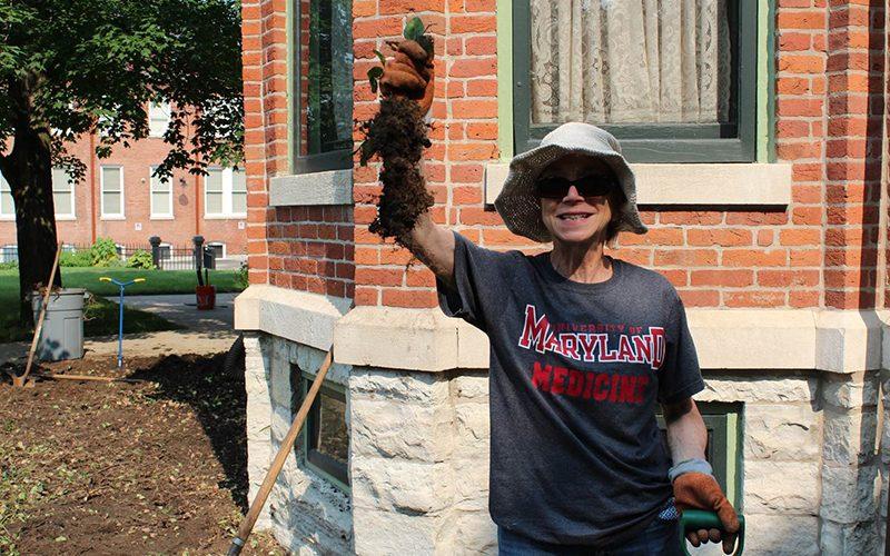 Volunteer maintaining building garden