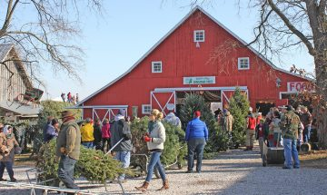 Dull's Tree Farm uses an 1888 timber frame barn for Christmas tree processing during the holiday season and as an event space the rest of the year.